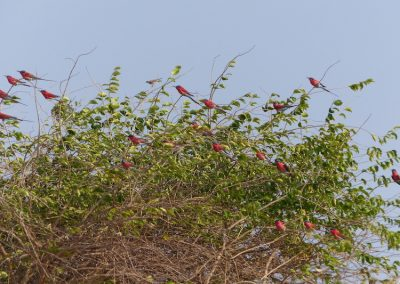 Birding 11